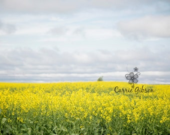 Canola field digital download