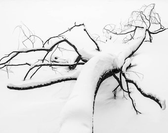 ONLY 1 COPY - One of A Kind Original Digital Photo Art File for Printing - Snow Branch - Limited Edition - Photography - Digital Photo