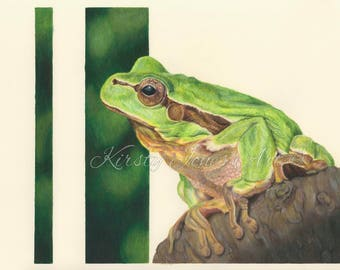 Frog Wildlife High Quality Print Drawing Coloured Pencil