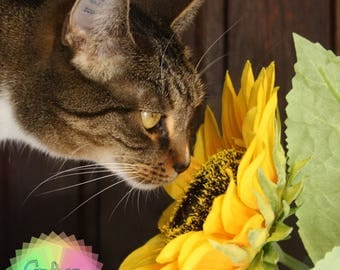 Cat with Sunflower Journal