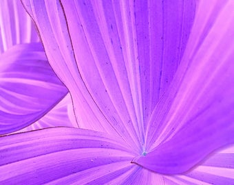 Abstract Art, Fine Art Photography, Canvas Art, Modern Decor, Macro Photography, Nature, Trending, Purple, Vivid Photography, Modern Home