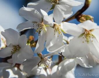Troy Gibbs-Brown: Floral Adventures