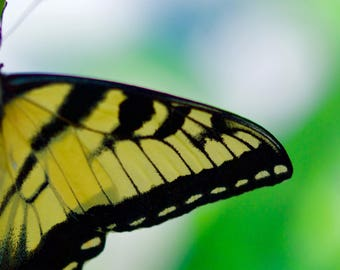Nature Photography, Color Photography, Butterfly Photography