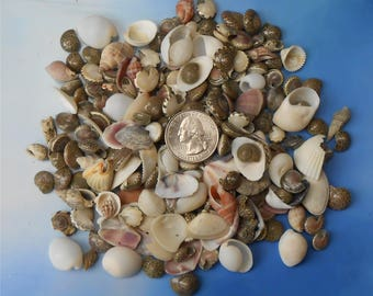 Sea Shells, Small Assorted Sea Shells, Craft Sea Shells, Jewelry Supply Sea Shells, Embellishments for Candle or Soap Making, Nautical