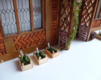 A tiny one 24th scale miniature seed box of 'lettuces'