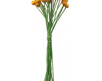 Stamen Millinery Flower Stamen Czech Republic Peps 24 Stems   MN-CZ54GY