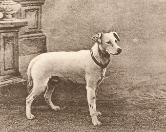 Dog, the guardian of the house antique English POSTCARD Vintage Postcard,  real photo, RPPC