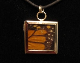 specimen necklace - Monarch butterfly wing, metal and glass frame