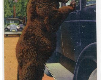 Hold Up Bear at Car Yellowstone National Park Wyoming linen postcard