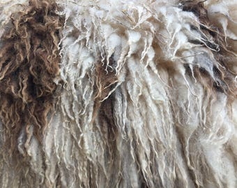 Hoggett (virgin) fleece from Ank-Lambs Joleen