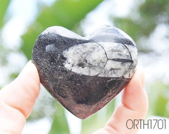 Orthoceras Heart | Orthoceras Fossil Heart Stone | Orthoceras Crystal | Black Marble Healing Properties | Fossilized Squid | Gift for Him
