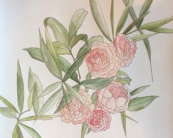 12 x 12 Original Watercolor Study - Camellias