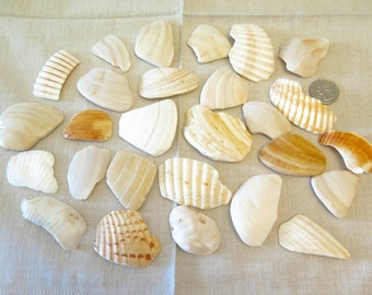 Shell Stone Pieces - 27 large smooth shell pieces, shell shards - 12.6 oz