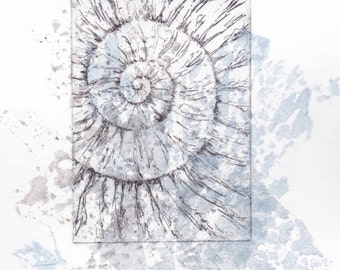 Etching with chine colle no.58  jurassic ammonite fossil Dorset coast fossil spiral fossil ammonites golden section