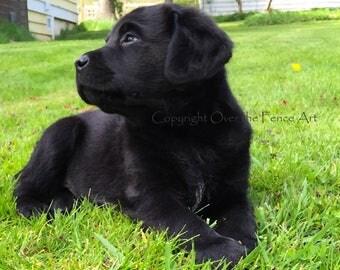 Black Labrador Card Puppy Watches Birds Fly Overhead Photo Greeting Card  Dog Portrait