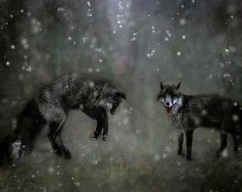 Wolf photo, wolves dancing in the snow, dark blue art print, wildlife photo, winter snow photo, rustic blue fantasy wall decor