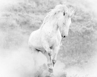 Adobe Town Stallion's Dance- Fine Art Wild Horse Photograph - Wild Horse - Adobe Town - Fine Art Print - Iconic Wild Horse