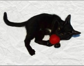 Felted Wool Cat Toy Ball - My Balls are Pink and Red and Make a Funny Noise