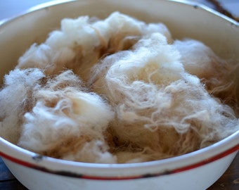 Raw Navajo-Churro Fleece, white, beautiful, professionally sheared