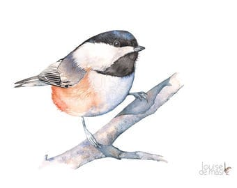 Chickadee print of watercolor painting, C20717, 5 by 7 size print, Chickadee watercolor print, Chickadee watercolor painting, Chickadee art