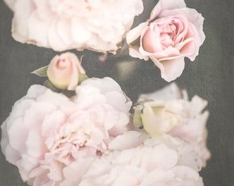 Large Print, Soft Pink Wall Art, Roses, Summer Photograph, Floral Print, Office Wall Art, Home Wall Art, Nursery Wall Art