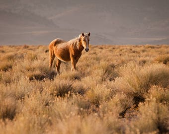 "Wild Mustang, 8""x10"" Photographic Print"