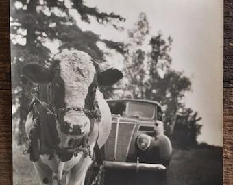 Original Vintage Photograph The Cow that Pulls the Car