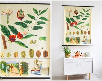 Coffee print, coffee poster, botanical vintage chart, pull down chart, coffee lover, Jung Koch Quentell  Ref: 409