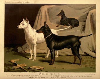 ENGLISH TERRIER Dogs ANTIQUE Chromolithograph Dog Print 1881 Vero Shaw Cassells and Company Christmas Thanksgiving illustration plate gift