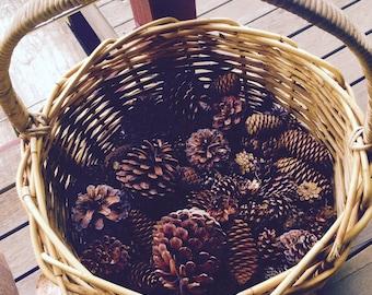 10 Natural Pine cones
