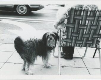 Vintage Snapshot Photo: Dog & Curbside Seat, c1970s (610514 )