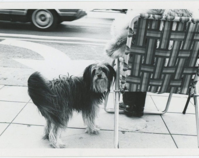 Vintage Snapshot Photo: Dog & Curbside Seat, c1970s (610514 )