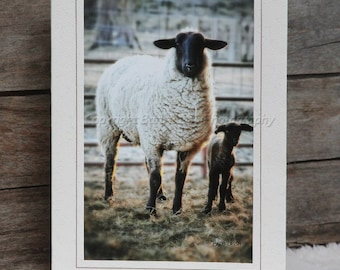 Five Assorted Greeting Cards, Sheep, Lambs Custom, Recycled Paper, Soybean Ink,Fine Art Photo, Barb Lassa,
