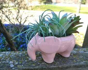 Pink Elephant Succulent in Ceramic Planter, Nursery Decor, Zen Flowers, Small Accent Flowers, Apartment Flowers