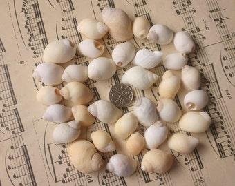 34 Small Natural Sea Shells Surf Tumbled Smooth Seashells Pink White Yellow Whelk Style Shells RA