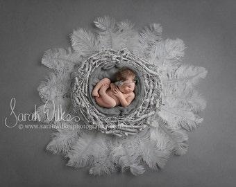 Newborn Digital Background - White Feather Nest