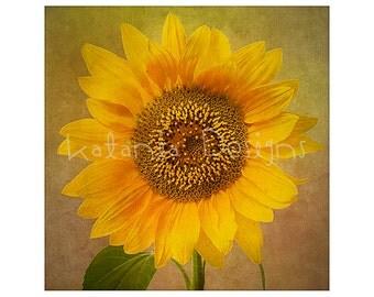 Photographic print, sunflower photo fine art print, flower photo picture, fine art flower print, gift for gardener, wall decor