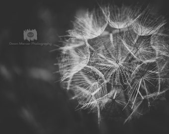 Dandelion Photo Black And White Photographic Print Art Nature Photography Dandelion Photograph Black And White Photography FREE SHIPPING