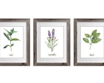 Herb Collection prints Set of 3, Green Herb Watercolor Painting, Lavender Basil Mint Medicinal Plants, Herbal Home Garden Wall Decor
