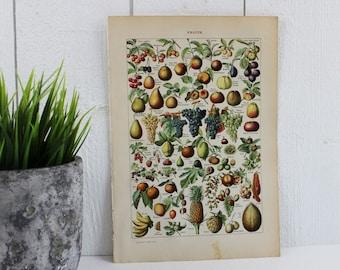 Fruit print - Vintage Poster Fruits Art Print, Botanical print, Kitchen wall decor, Gift for Vegetarian, Veggies, Antique Prints, E419