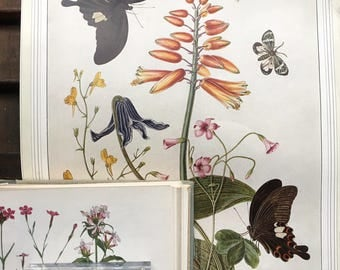 Butterfly and botanical print....