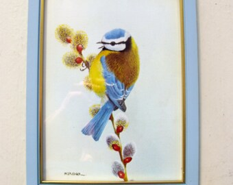 Small cute vintage framed print of a blue tit.