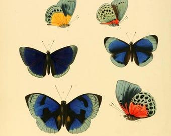 Butterflies exotic prints 1862 49 printable prints