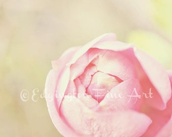 Pink Rose photo, Flower photography, rose photo, nature photography, shabby chic, bathroom decor, pink flowers, flower picture, pink rose
