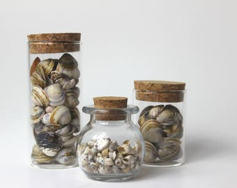 shells, freshwater shells, mussels, glass jars, cork lids, display, decorations,natural, minimalist,gift