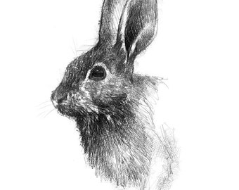 Wild rabbit | Limited edition fine art print from original drawing. Free shipping.
