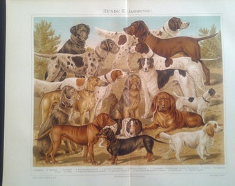 "Chromolithograph, ""dogs II. hunting dogs""."
