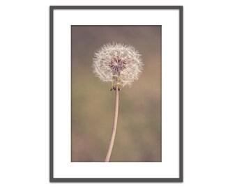Dandelion photograph, dandelion, art, wall, decor, nursery wall art, girl's room, soft, flower, nature prints, nursery decor, farmhouse