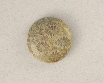 Petrified Coral #1047