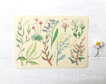 Postcard, 'Flowers of the Saltmarsh', botanical art,